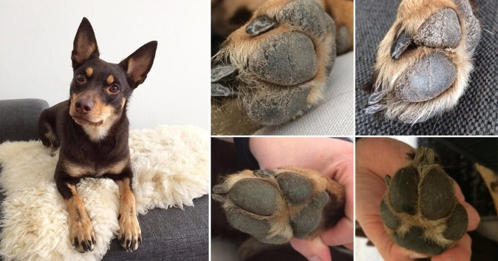 Nutrolin_Happy_Customer_paw_pads_fb