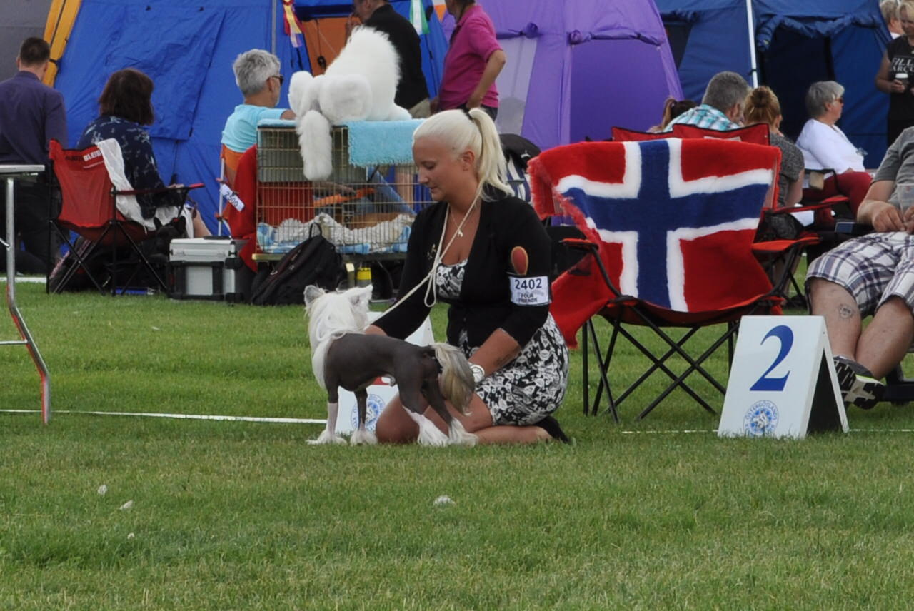 Nutrolin_dog_show_chinese_crested