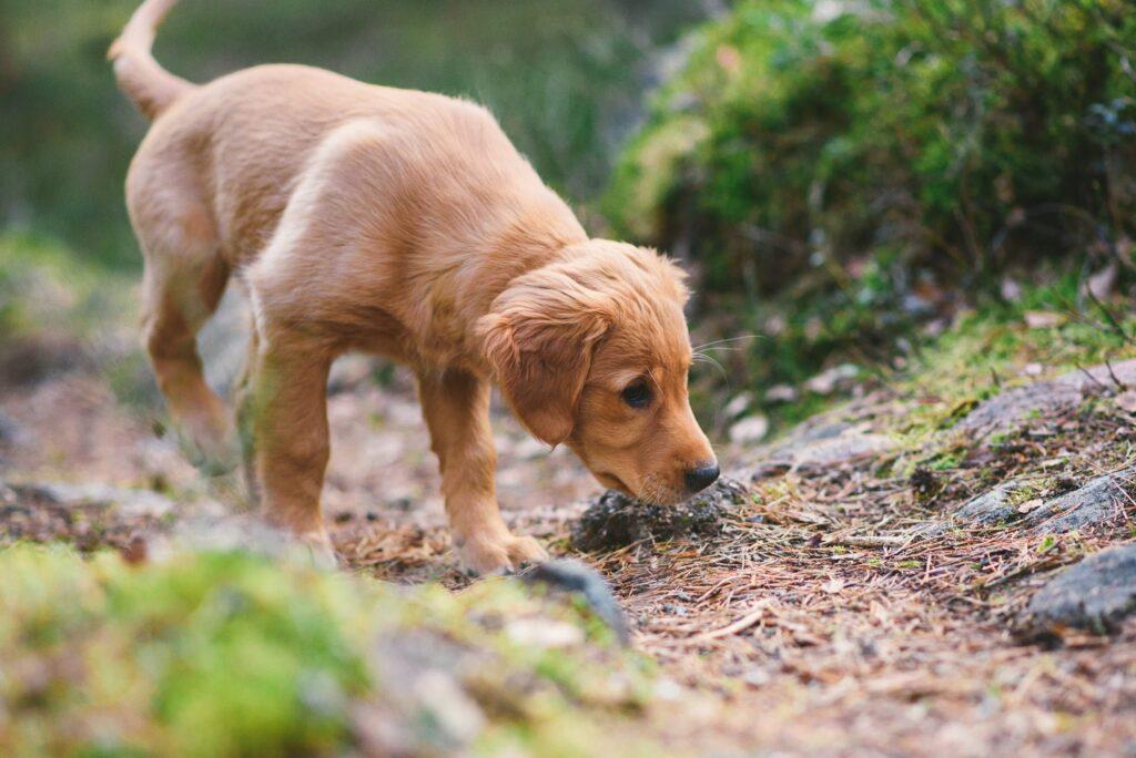 Nutrolin_puppy_training-2