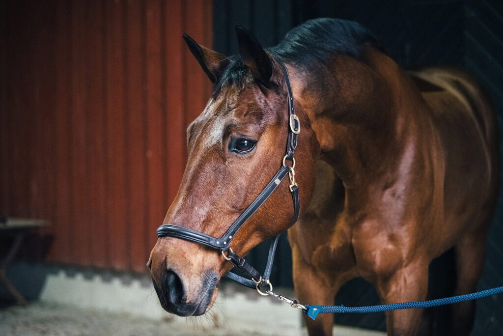 Nutrolin_HORSE_chafing_Rex1