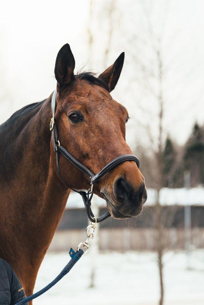 Nutrolin_HORSE_chafing_Rex2