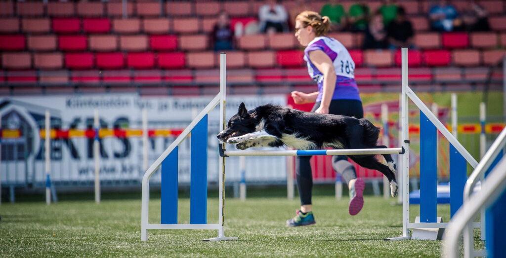 Nutrolin_agility_dog_health2