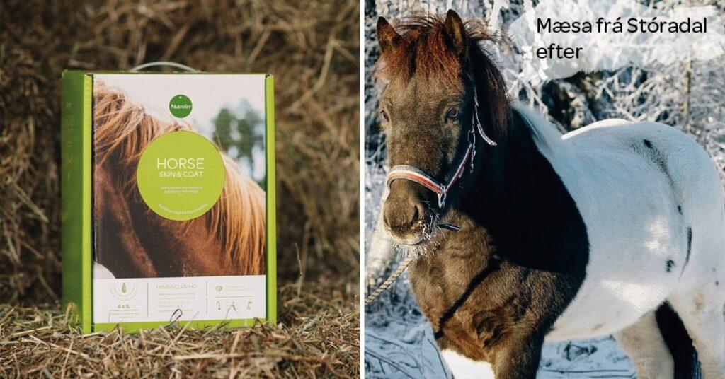Nutrolin_horse_Mæsa_after