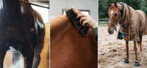 Nutrolin_horse_skin_coat_Sweet_itch1
